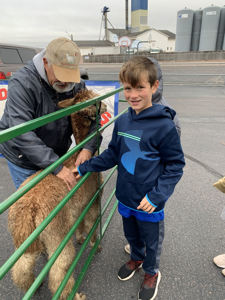 Chase petting the Alpaca