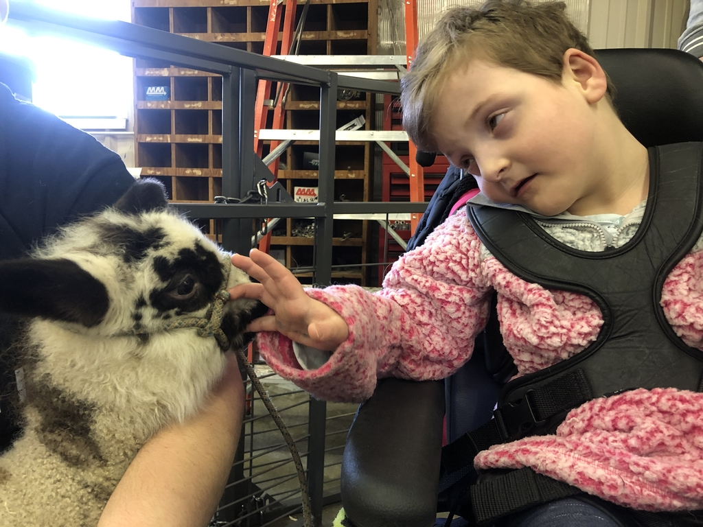 "She wants to name the baby lamb ""Zorro""!  FFA asked kids to name their sweet new addition!"